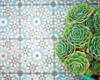 Overhead view of cacti on tiled floor