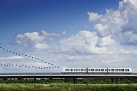 Birds flying in formation behind train