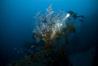 Diver examining underwater plants