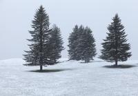 Trees growing in snowy landscape