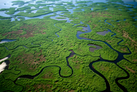 Wetlands aerial, Mangrove estuary system, Everglades National Park, Florida