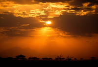 Savanna landscape, Amboseli National Park, Kenya