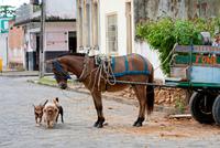 Bahia Street Dogs 20056008651| 写真素材・ストックフォト・画像・イラスト素材|アマナイメージズ
