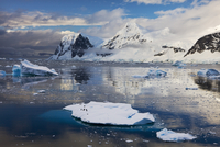 Penguins floating on an iceberg in the Gerlache Strait, Antarctic Peninsula, Antarctica., Polar Regions