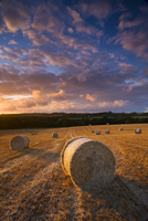 Circular hay bales in field, Morchard Bishop, Mid Devon, England, United Kingdom, Europe