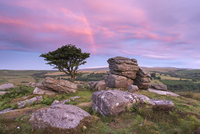 Dawn rainbow above Holwell Tor in summer, Dartmoor, Devon, England, United Kingdom, Europe