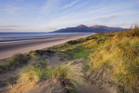 Early morning sunlight lights up the Mountains of Mourne, and the sand dunes of Murlough Bay in County Down, Ulster, Northern Ir