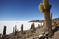 Isla del Pescado (Fish Island) on Salar de Uyuni (Salt Flats of Uyuni), Potosi Department, Bolivia, South America