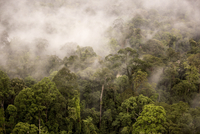 Rain mist rising from the forest canopy in Danum Valley, Sabah, Malaysian Borneo, Malaysia, Southeast Asia, Asia
