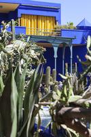 The Majorelle Gardens, Marrakech, Morocco, North Africa, Africa