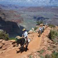Tourists on horseback returning from trekking in the Grand Canyon, UNESCO World Heritage Site, Arizona, United States of America