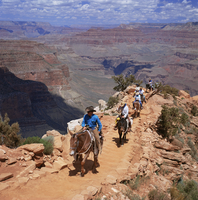 Returning on horseback, Grand Canyon, UNESCO World Heritage Site, Arizona, United States of America, North America