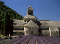 Abbaye de Senanque and lavender, near Gordes, Vaucluse, Provence, France, Europe
