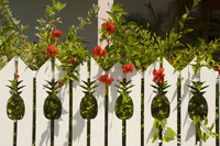 Hibiscus growing next to a fence with pineapple shaped cutouts, Dunmore Town, Harbour Island, The Bahamas, West Indies, Central