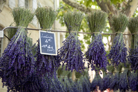 Bunches of lavender for sale in the market in Uzes, Provence, France, Europe