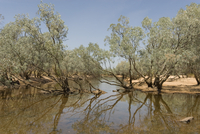 Billabong waterhole beside the Gibb River Road across The Kimberley, Western Australia, Australia, Pacific