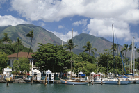 Sailing boats in the harbour of Lahaina, an old whaling station, west coast, Maui, Hawaii, Hawaiian Islands, United States of Am