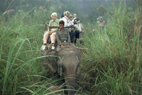Tourists on elephant back in long grass, viewing game in the Chitwan National Park, Nepal, Asia 20062006711| 写真素材・ストックフォト・画像・イラスト素材|アマナイメージズ