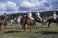 The Geeburg Polo Match, Bushmen versus Melbourne Polo Club, Australia, Pacific