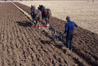 Ploughing with horses on a farm near Burford, Oxfordshire, England, United Kingdom, Europe