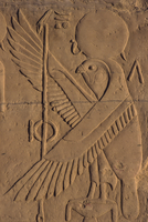 Detail of relief carving of the falcon (hawk) god, Kom Ombo, Egypt, North Africa, Africa