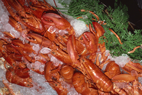 Lobsters on sale in popular Pike Place Market, Seattle, Washington state, United States of America, North America