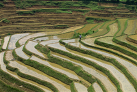 Farmer in terraced rice paddies at Longsheng in north east Guangxi, China, Asia 20062007982| 写真素材・ストックフォト・画像・イラスト素材|アマナイメージズ