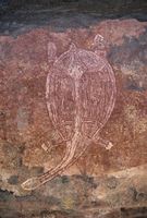 Painting of turtle at the aboriginal rock art site at Obirr Rock in Kakadu National Park where the paintings date from 20000 yea