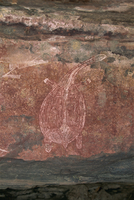Painting of a turtle at the Aboriginal rock art site at Ubirr Rock, Kakadu National Park, where paintings date from 20000 years