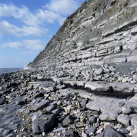Fossil bearing lias beds, Seven Rock Point, Jurassic Coast, UNESCO World Heritage Site, Lyme Regis, Dorset, England, United King 20062009776| 写真素材・ストックフォト・画像・イラスト素材|アマナイメージズ