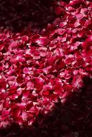 Bath with rose petals 20062010340| 写真素材・ストックフォト・画像・イラスト素材|アマナイメージズ
