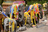 Garlanded elephants at a scenic spot in Phuket, Thailand, Southeast Asia, Asia 20062011154| 写真素材・ストックフォト・画像・イラスト素材|アマナイメージズ
