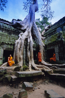 Monks in the Ta Prohm Temple, Angkor, UNESCO World Heritage Site, Siem Reap, Cambodia, Indochina,  Asia 20062011643| 写真素材・ストックフォト・画像・イラスト素材|アマナイメージズ