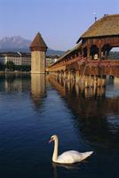 Kapellbrucke (covered wooden bridge) over the River Reuss, Lucerne (Luzern), Switzerland, Europe 20062011696| 写真素材・ストックフォト・画像・イラスト素材|アマナイメージズ