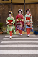 Maiko (apprentice geisha) walking in the streets of the Gion district wearing traditional Japanese kimono and okobo (tall wooden 20062012001| 写真素材・ストックフォト・画像・イラスト素材|アマナイメージズ