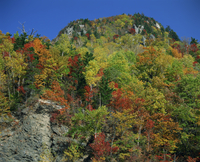 Trees in autumn colours on the island of Hokkaido, Japan, Asia 20062012431| 写真素材・ストックフォト・画像・イラスト素材|アマナイメージズ