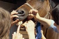 Inspecting horse's teeth, England, United Kingdom, Europe 20062013799| 写真素材・ストックフォト・画像・イラスト素材|アマナイメージズ
