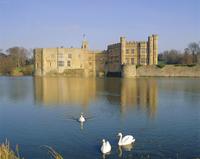 Swans in front of Leeds Castle, Kent, England 20062013931| 写真素材・ストックフォト・画像・イラスト素材|アマナイメージズ
