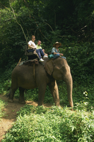 Tourists ride on an elephant at the Chiang Dao Elephant Training Centre at Chiang Mai, Thailand, Southeast Asia, Asia 20062016773| 写真素材・ストックフォト・画像・イラスト素材|アマナイメージズ