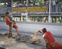 Two men exhibit crocodiles to tourists at a crocodile farm near Bangkok, Thailand, Southeast Asia, Asia 20062018156| 写真素材・ストックフォト・画像・イラスト素材|アマナイメージズ