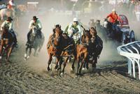 Chuck Wagon Race, Calgary Stampede, Alberta, Canada 20062020638| 写真素材・ストックフォト・画像・イラスト素材|アマナイメージズ