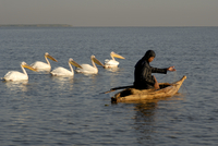 Papyrus boat, fisherman, pelicans, Lake Tana, Ethiopia, Africa 20062022841| 写真素材・ストックフォト・画像・イラスト素材|アマナイメージズ
