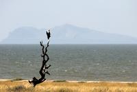 Fish eagle, Lake Turkana, Kenya, East Africa, Africa 20062022852| 写真素材・ストックフォト・画像・イラスト素材|アマナイメージズ