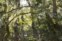 Fairytale forest, Tierra del Fuego, Argentina, South America 20062023143| 写真素材・ストックフォト・画像・イラスト素材|アマナイメージズ