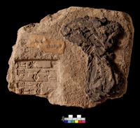 Clay brick; Ur-Nammu no. 3; cuneiform inscription stamped on