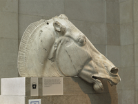 Marble horse head of Selene from the Parthenon, Athens. Gree