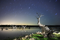 Dead Holm oak trees {Quercus ilex} in lake, at night with st