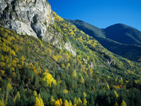 Autumnal trees and a rocky outcrop in Sierra del Balcon. Val