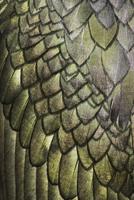 Close-up of feathers of Shag (Phalacrocorax aristotelis) Sal