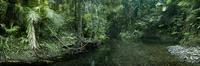 Jungle stream and rainforest, Daintree National Park, Queens
